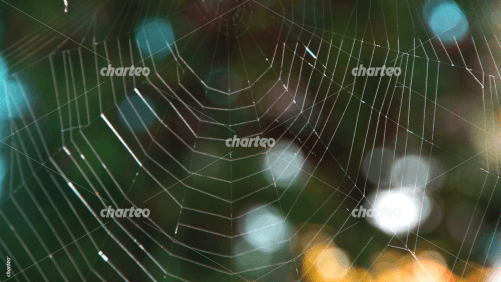Lower half of a delicate spider web