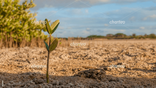 Slender seedling sprouts from earth