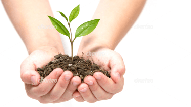 Two hands holding a seedling in dirt
