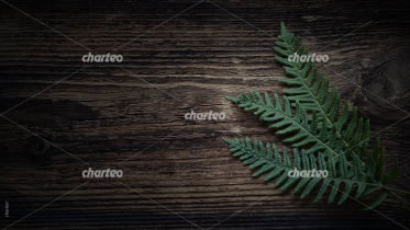 Wood with Fern Leaves
