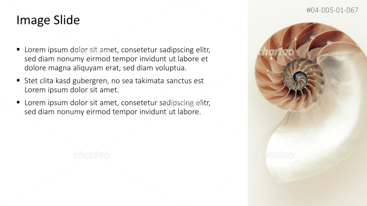 Placeholder text with a cross section of a snail shell