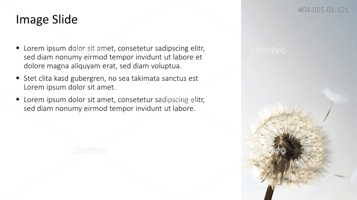 Placeholder text with image of dandelion seed head
