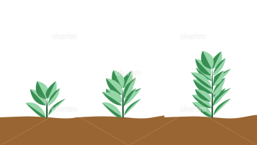 Three plants in different growth stages
