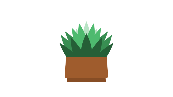 Green plant in flower pot