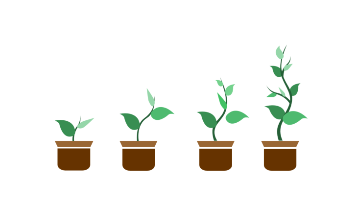 Four potted plants in different growth stages